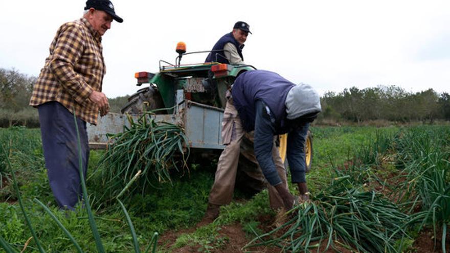 """Unió de Pagesos alerta de les """"desigualtats"""" que pateix la pagesia gran"""