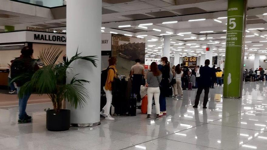 Un avión de Iberia que volaba a Madrid regresa a Palma al colarse un ave en un motor