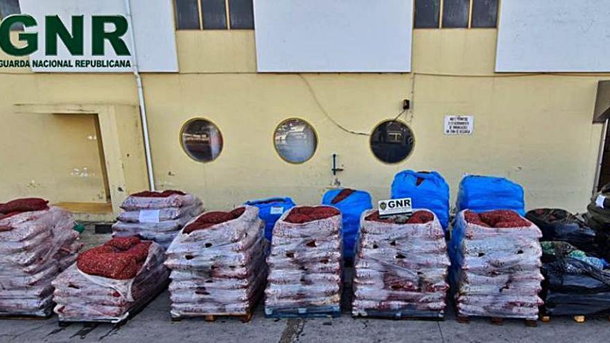 Portugal intercepta casi 20 toneladas de almeja ilegal en menos de una semana