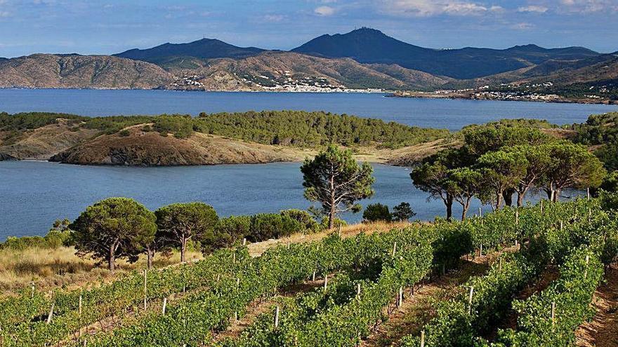 Els vins empordanesos segueixen sumant premis i reconeixements