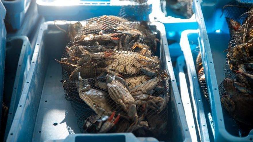 Agricultura preveu 6 MEUR en ajuts al foment de la pesca i l'aqüicultura sostenibles