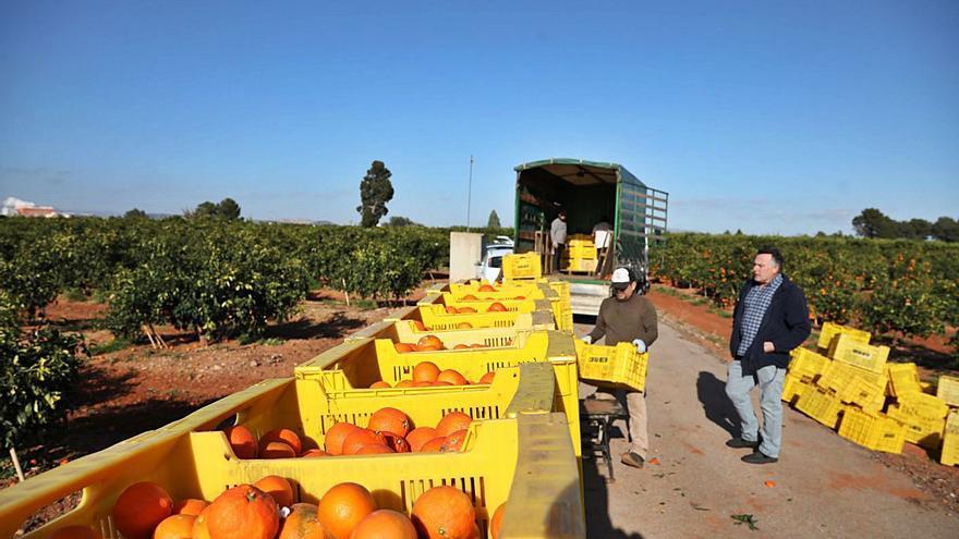 La patronal citrícola rechaza la ley del Gobierno que fija 'precios mínimos' para los agricultores