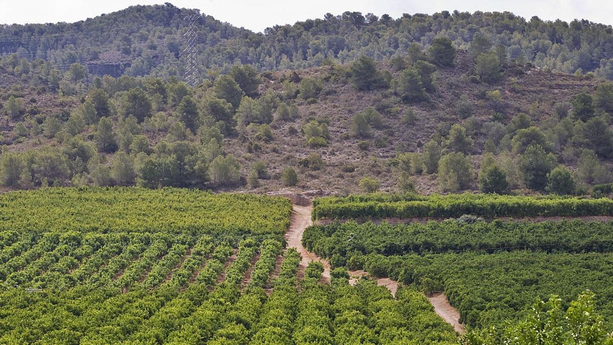Terrenos incluidos en el PAI de Porxinos, junto al Parque Natural del Túria, donde se proyectó la ciudad deportiva del Valencia CF. | FERNANDO BUSTAMANTE
