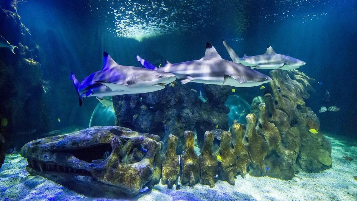 Tiburones en Sea Life Benalmádena.