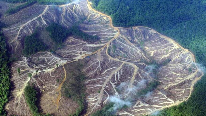 España provoca la deforestación de 32.900 hectáreas de selva cada año