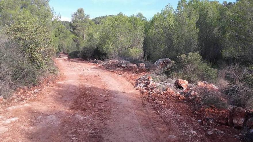 Son Rapinya denuncia una tala masiva de pinos y Urbanismo paraliza las obras