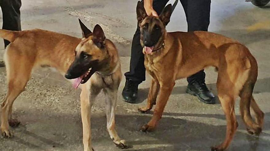 Riba-roja formará a una sección de la Policía Local contra el maltrato animal
