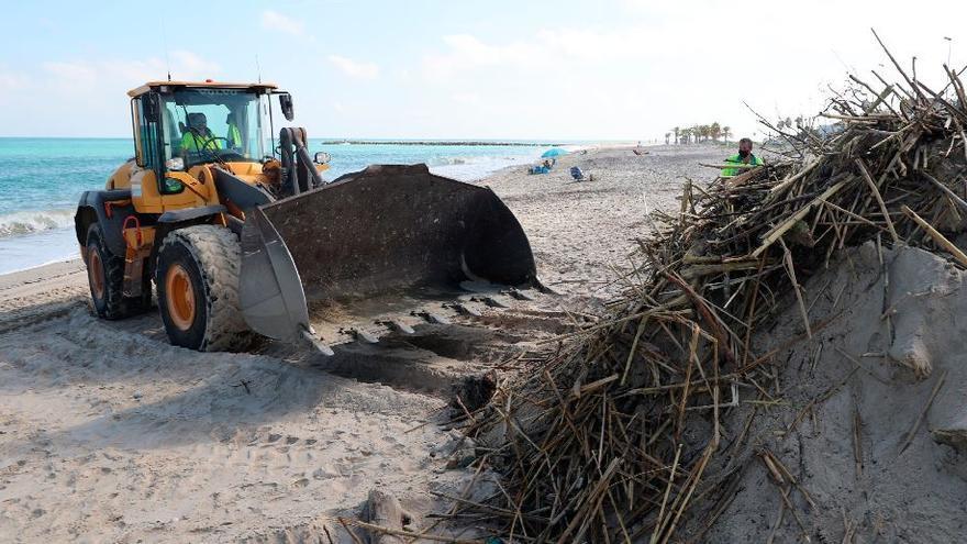 Miles de cañas en las playas de Castelló y Almassora tras el temporal