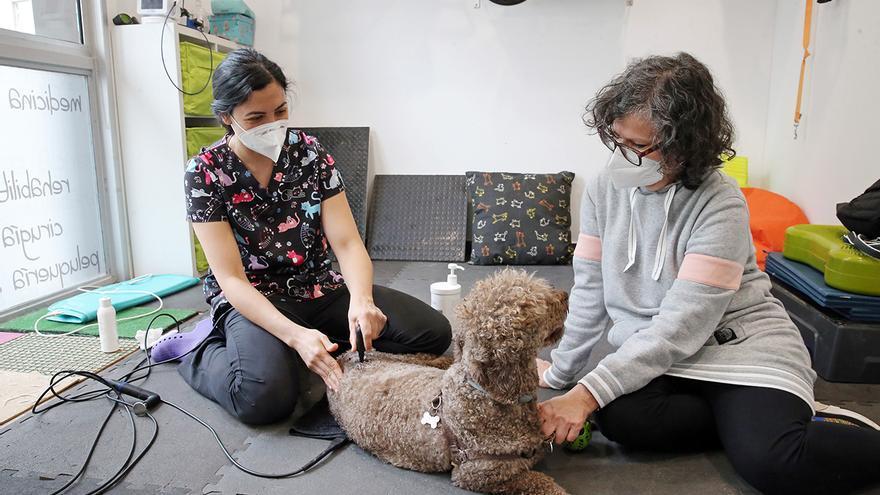 Una clínica veterinaria de Vigo utiliza tecnología de radiofrecuencia para reducir los dolores de los perros