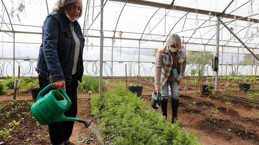 Verdear: cuando la tierra engancha y rehabilita
