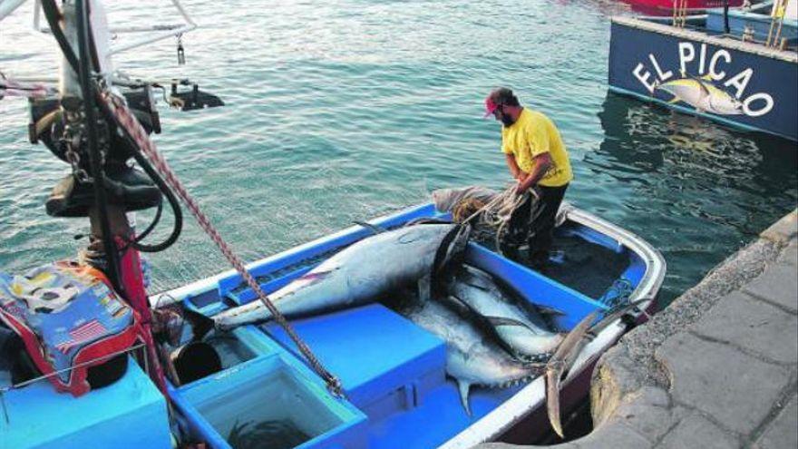 Regulada la pesca española del atún rojo de 2021 con adelanto para Canarias
