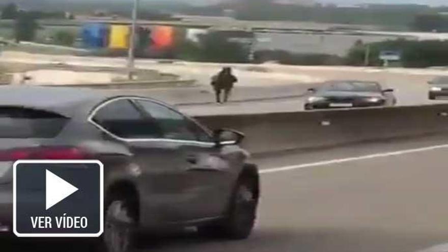 Un caballo desbocado invade una autovía en Barcelona