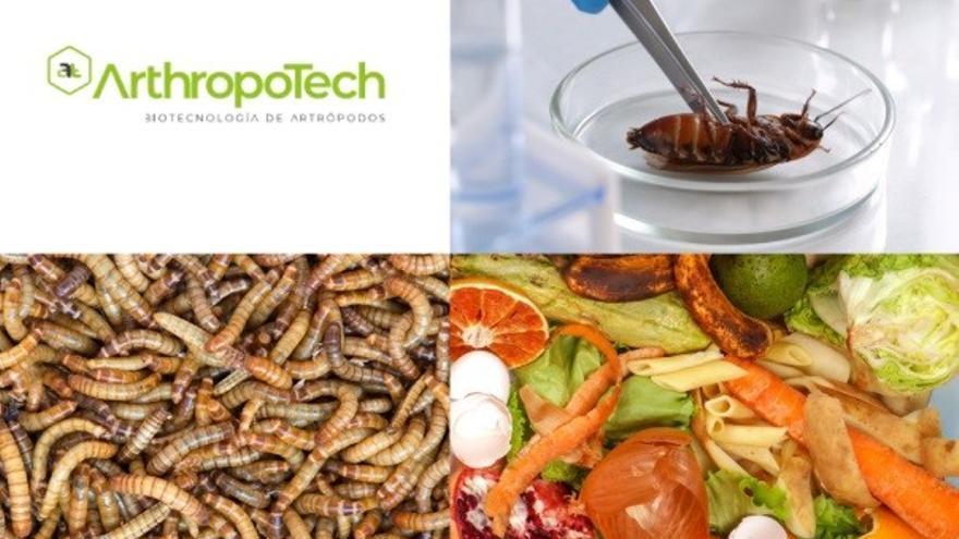 Nace de la UMU la empresa Arthropotech, especializada en la cría de insectos para alimentación y la investigación para el control de plagas y de especies invasoras