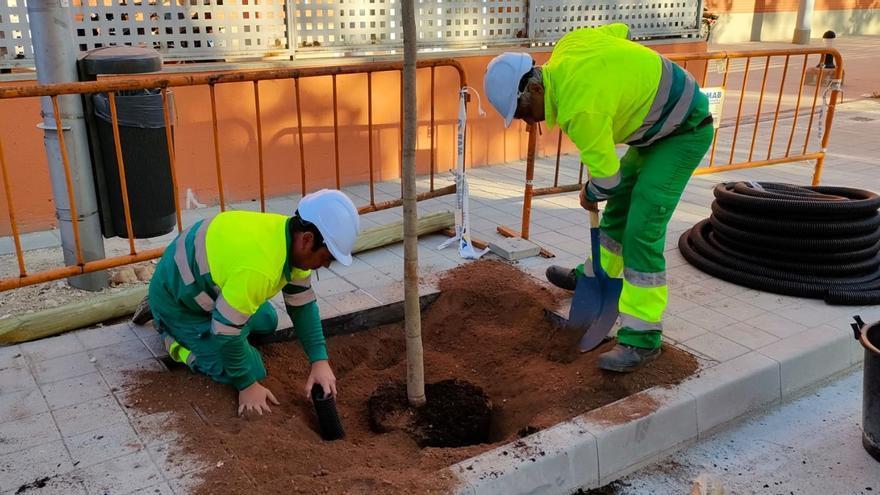 Cort planta 19 árboles en Son Dameto