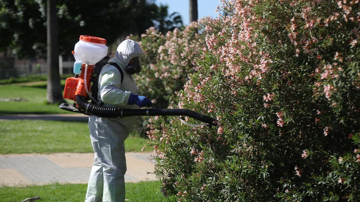 Un operario realiza labores de fumigación contra los mosquitos.