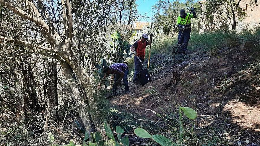 El Parc Natural del Cap de Creus elimina una planta invasora a Vilajuïga