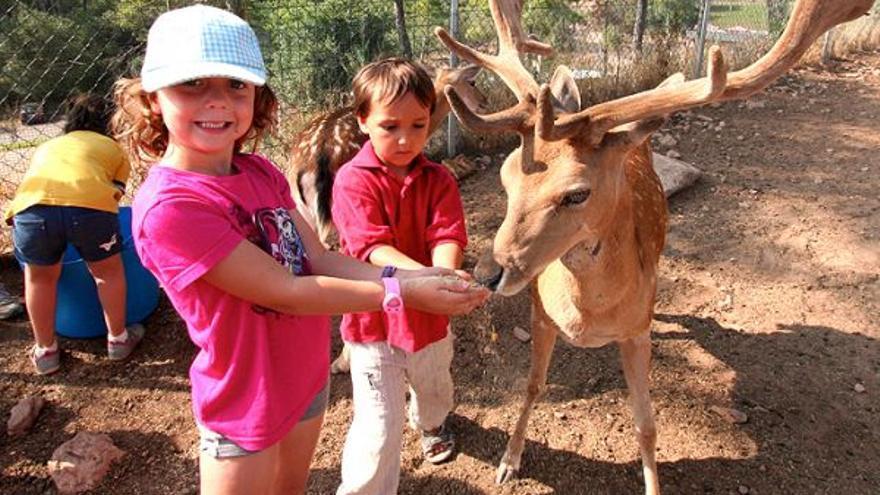 Veure i tocar els animals al Centre d'Apropament a la Natura (Navàs)