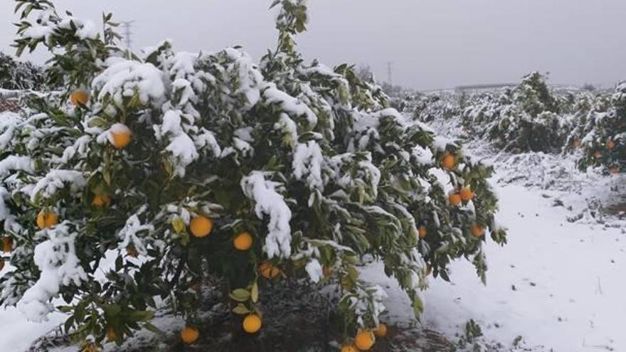 La nieve y el viento rematan la campaña de cítricos con pérdidas de hasta el 80 %