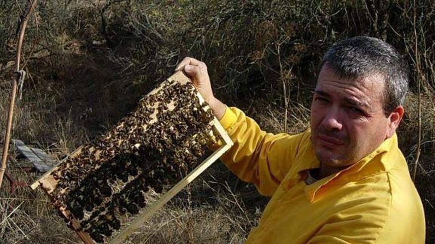 La Abeja del Guanche gana una medalla de plata con su miel ecológica en Italia