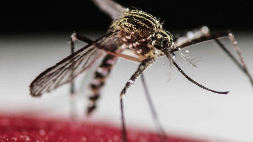 """El zika podría ser """"más peligroso de lo que se pensaba"""""""