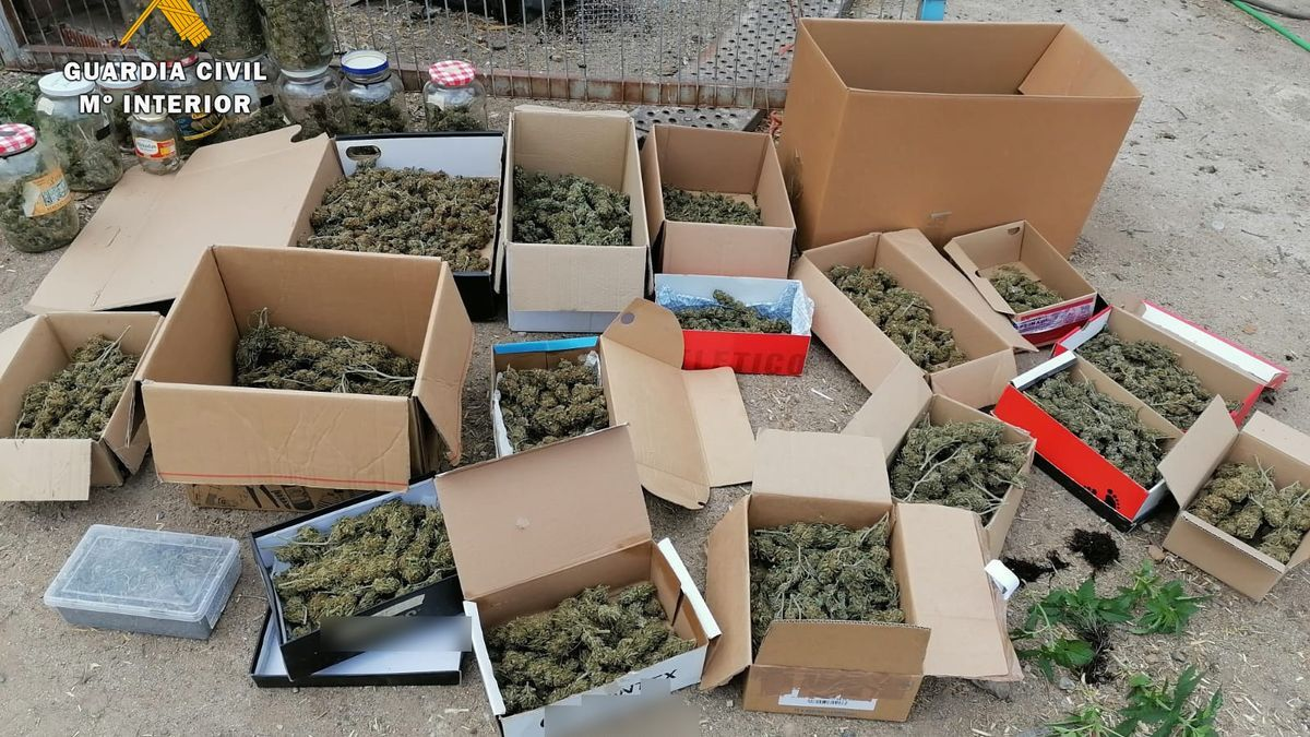 Parte de la marihuana incautada por la Guardia Civil.