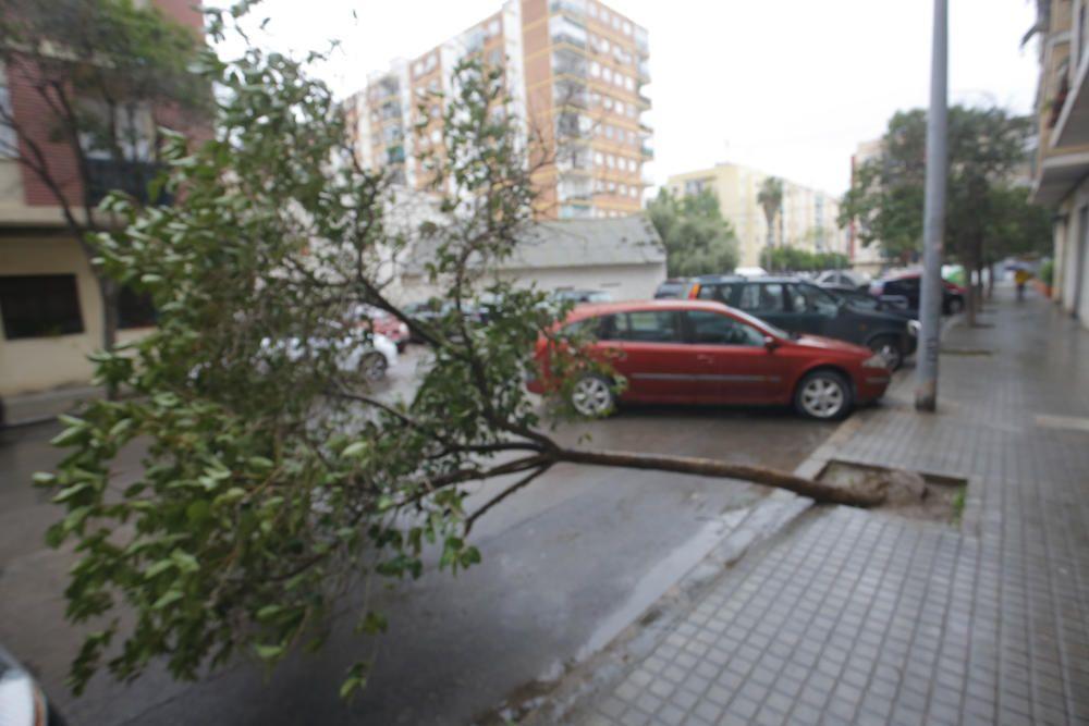 Árbol caído en la calle Abu Salt en Marxalenes