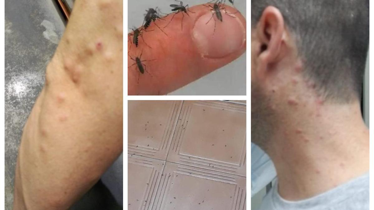 Los vecinos del Grau de Castelló sufren múltiples picaduras ante la plaga.