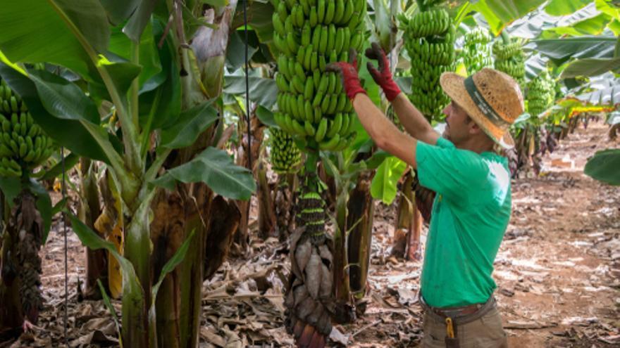 Se necesitan peones agrícolas para fincas de plátanos en Tenerife