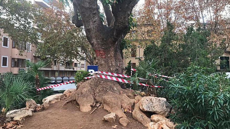 Quejas por el mal estado de la plaza de los Patines de Palma