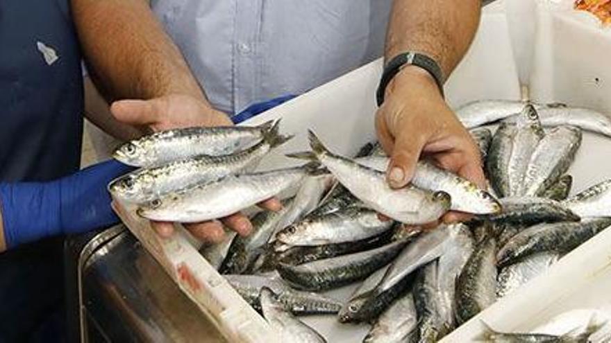 El cerco gallego no se rinde y se suma al portugués para exigir más sardina