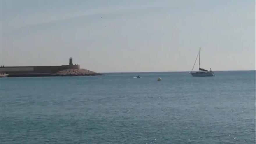 Los delfines se dejan ver en Xàbia
