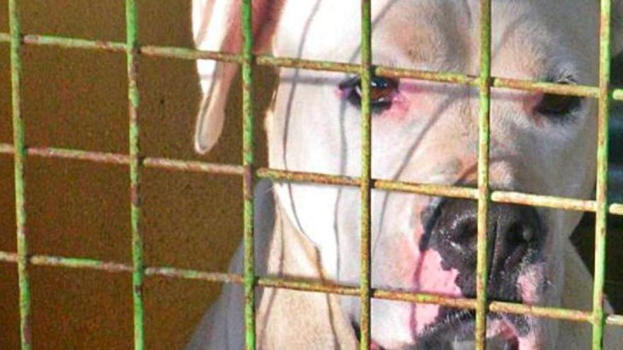 Una ley catalogará a los perros peligrosos por su conducta y no por su raza