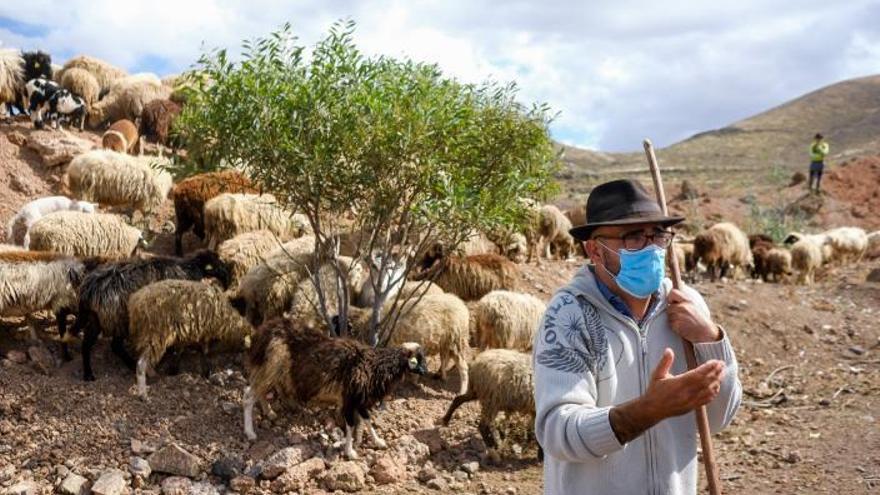 Ruymán Mena, el artista de las ovejas