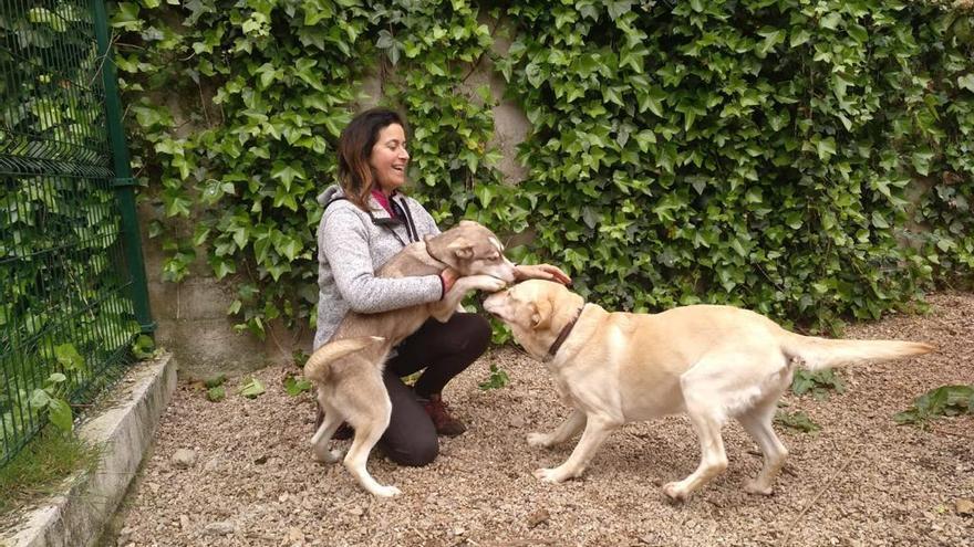 Refugio canino en tiempos de cólera
