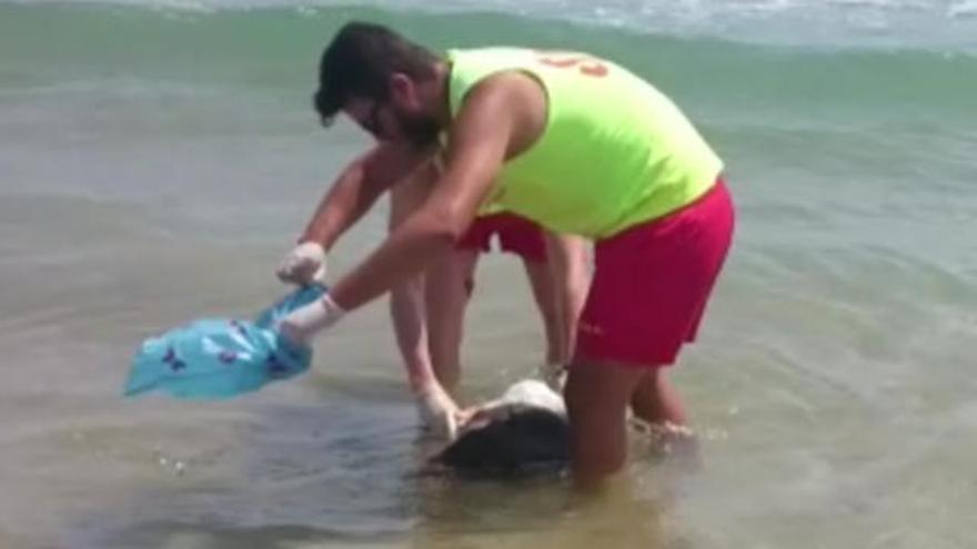 Hallan un perro decapitado en la playa de Cullera