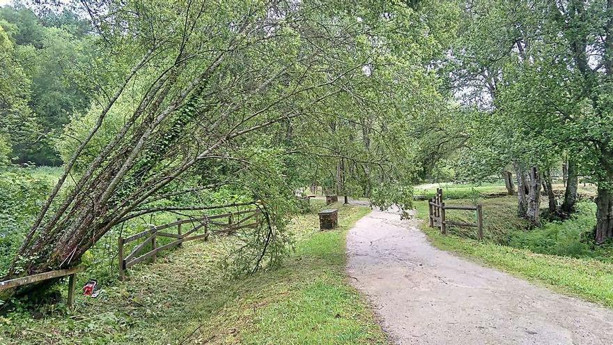 Intensa jornada de lluvia con otro árbol caído en el Pontiñas