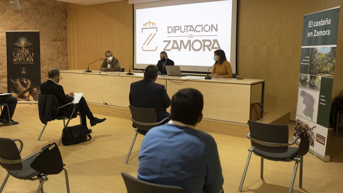 Primera reunión de la Mesa del Castaño de Zamora.