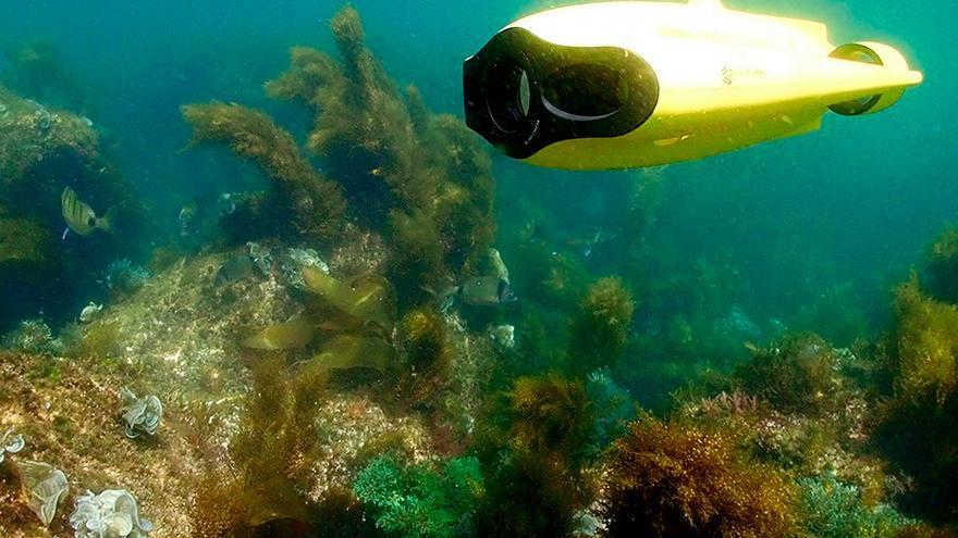 """La cooperativa """"13 grados"""" realiza actividades para conocer los fondos marinos de la Ría en primera persona"""