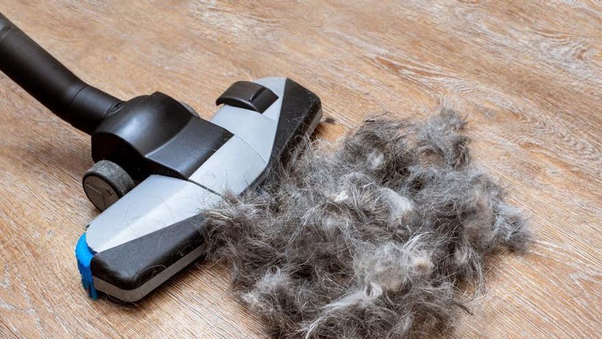 ¿Cómo evito que a mi perro se le caiga tanto el pelo?
