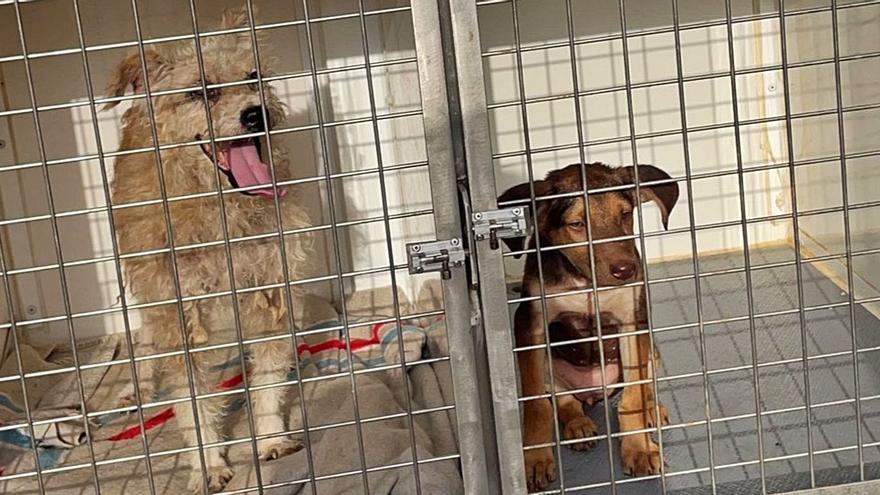 Decomisan un centenar de perros  a una mujer con síndrome de Noé