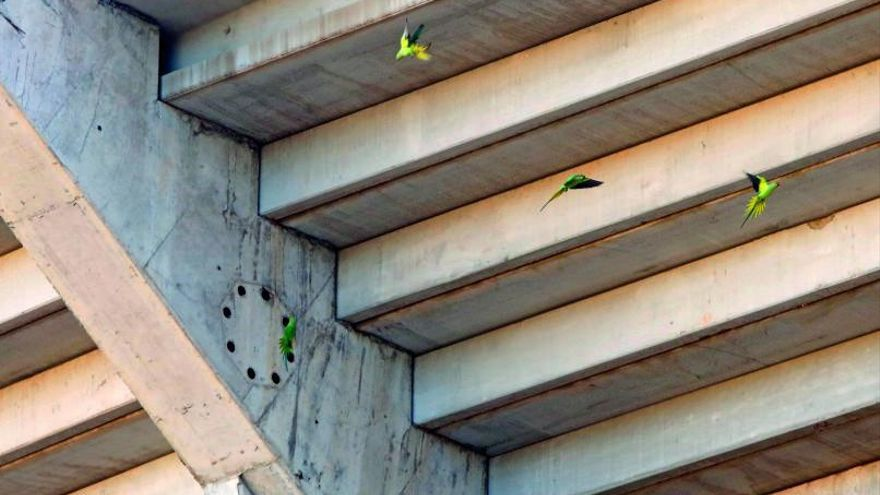 Degradación, óxido y nidos de cotorras en el nuevo Mestalla |