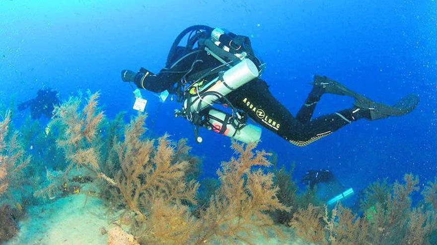 La isla inicia la investigación sobre los bosques submarinos de coral negro