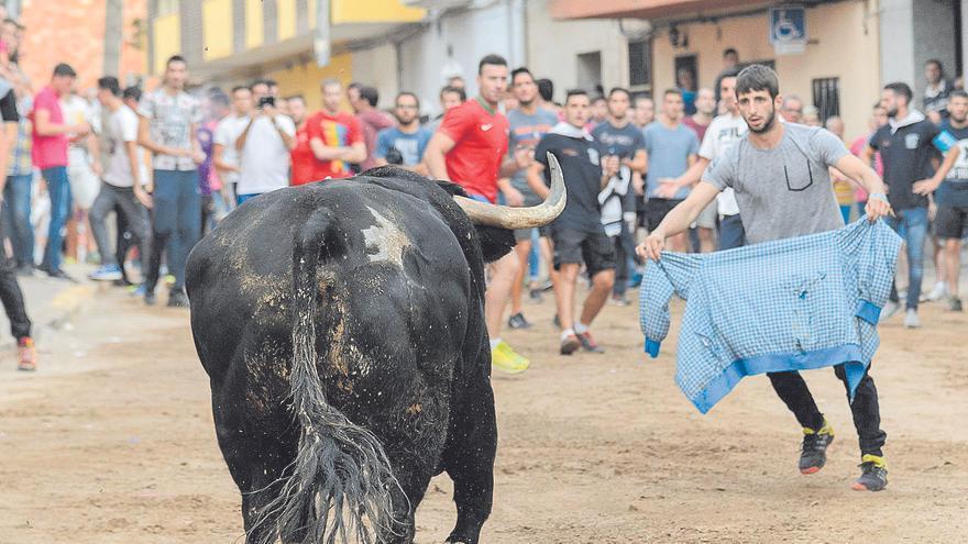 Comisiones de fiestas no ven viable hacer 'bous al carrer' con aforos