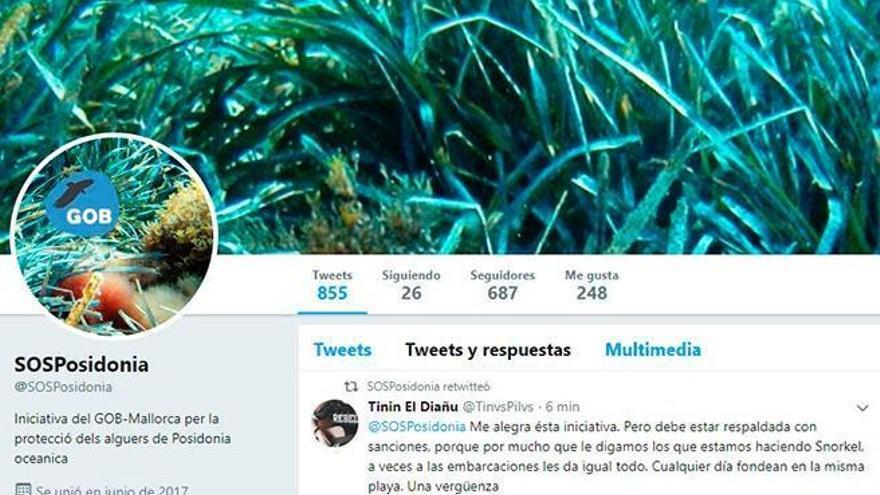 Bitte petzen! Umweltschützer eröffnen Twitter-Konto für Poseidongras-Sünder