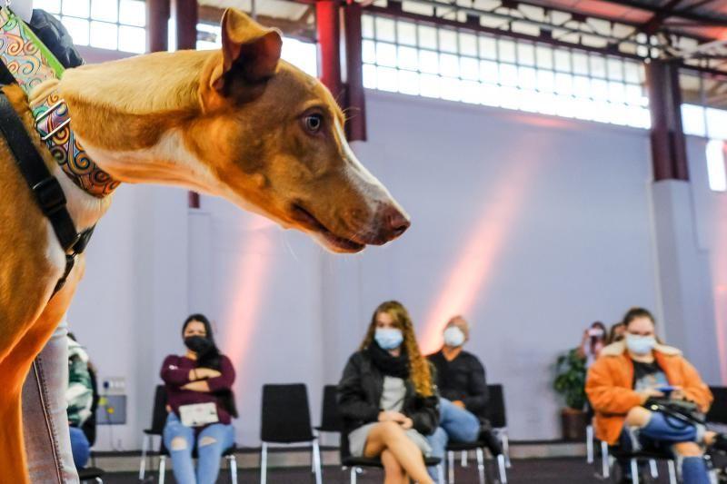 3 ª Feria del Animal de Compañía