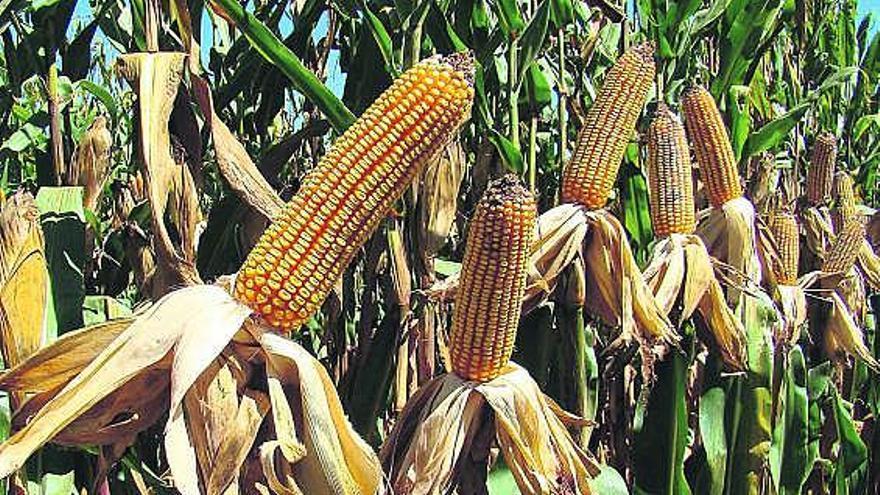 El sector agroalimentario pide una legislación que le ayude a descarbonizarse