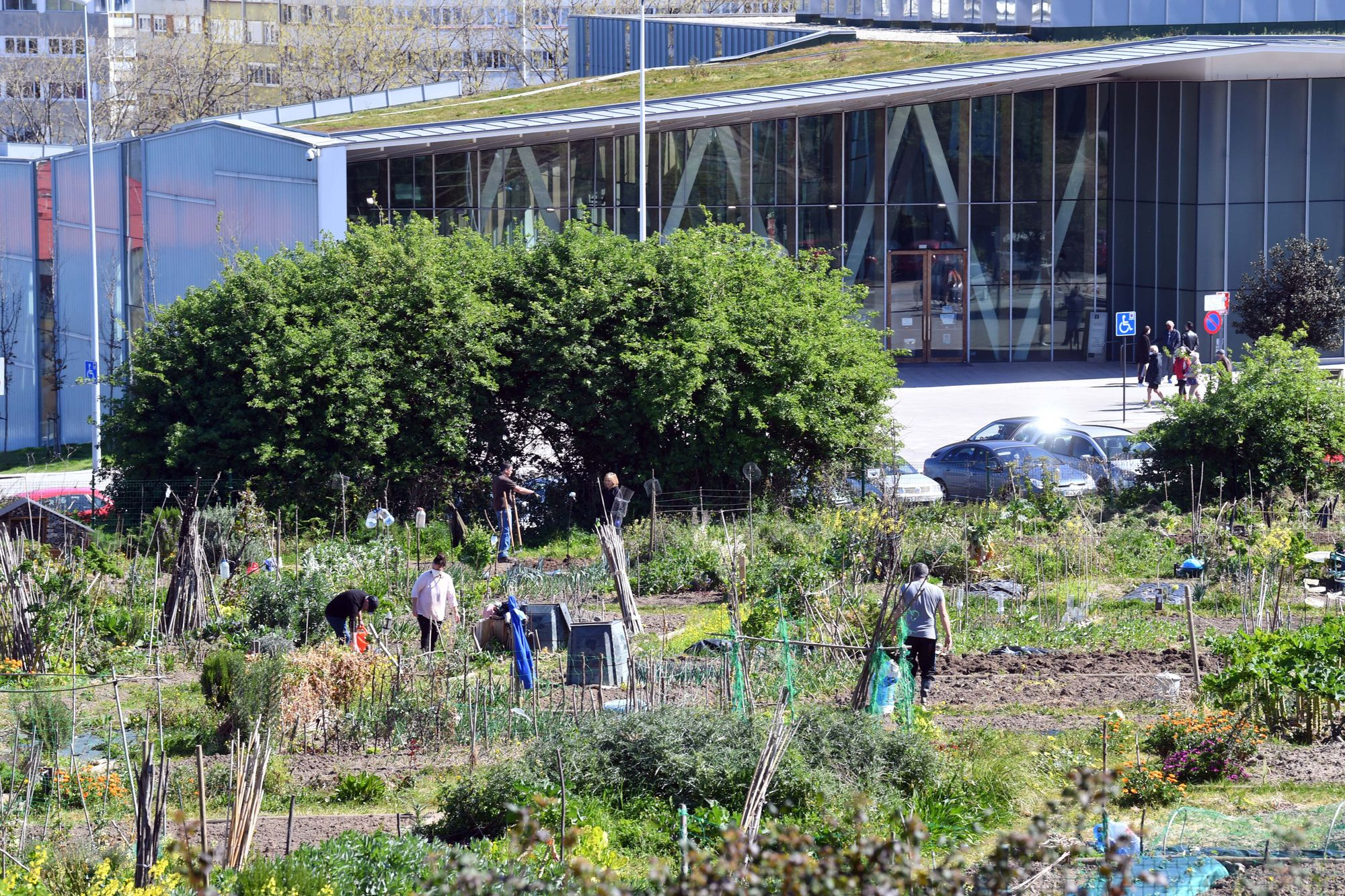 Huertos urbanos de A Coruña, un ocio saludable