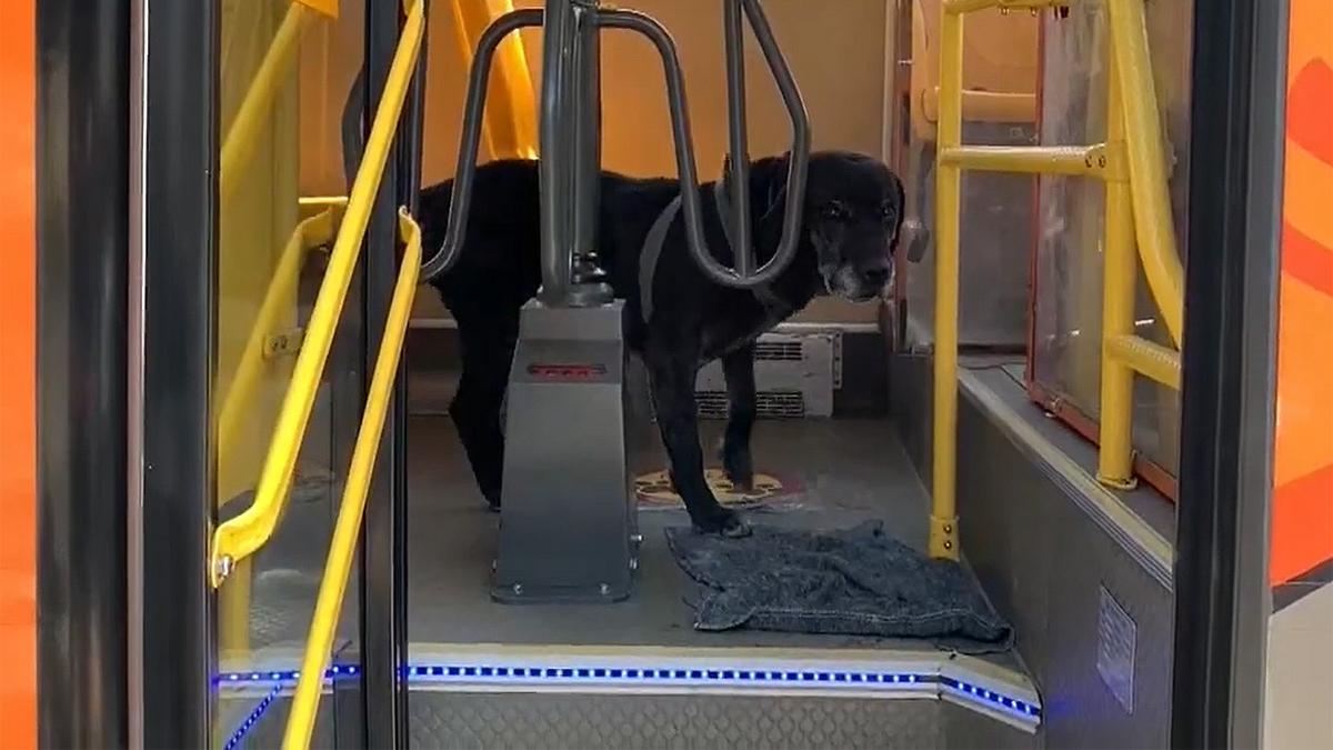 El perro 'Don Alonso', en un autobús de La Paz.