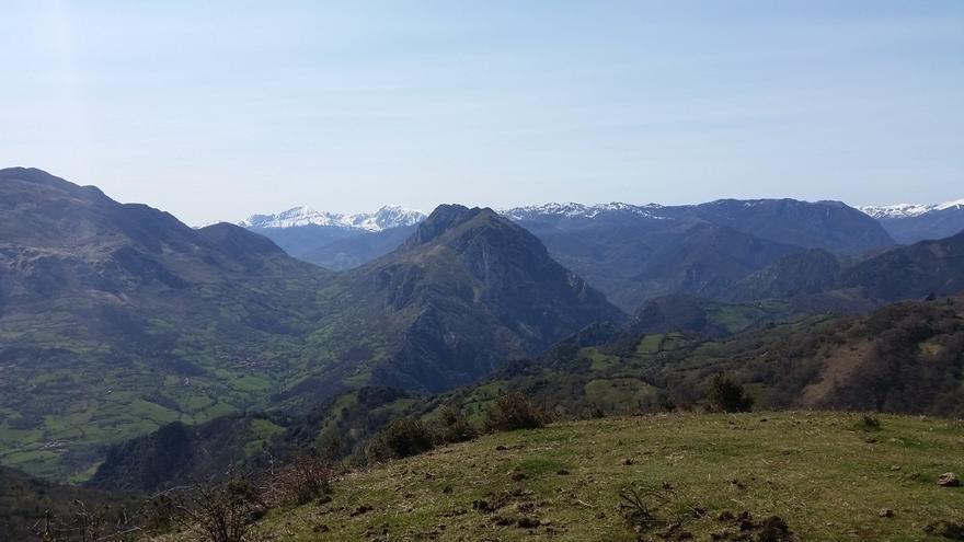 El osezno rescatado en Yernes y Tameza en abril se recupera en un cercado en Proaza