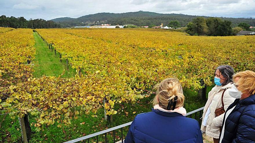 La Ruta do Viño Rías Baixas capea el temporal